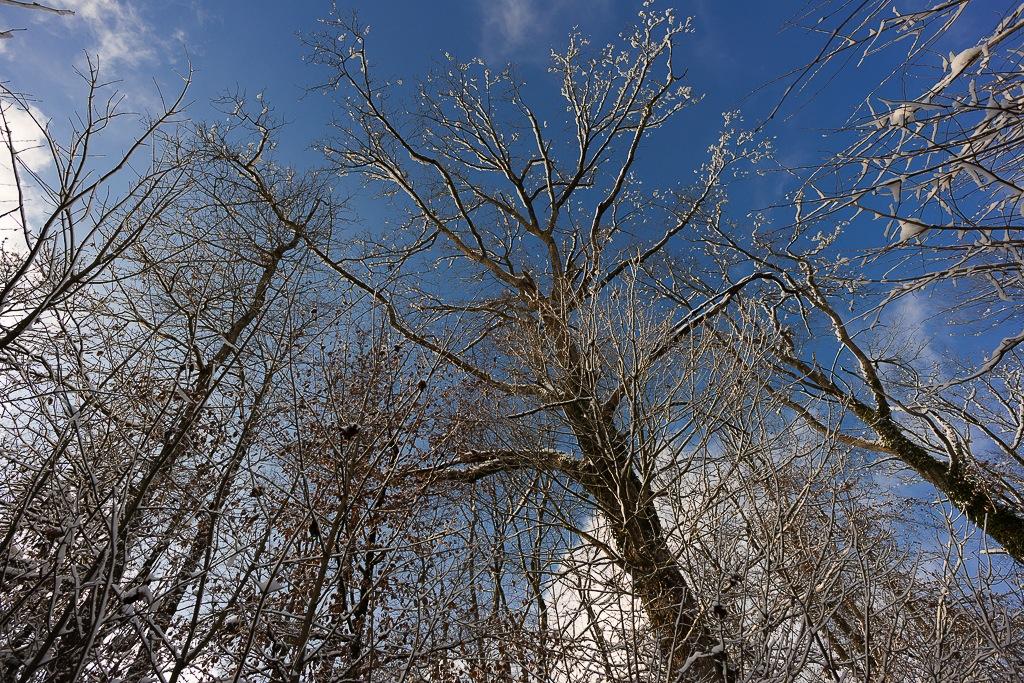 Winterliche Eichen im Waldgebiet Andelbach © 2012 Michael Wiesner