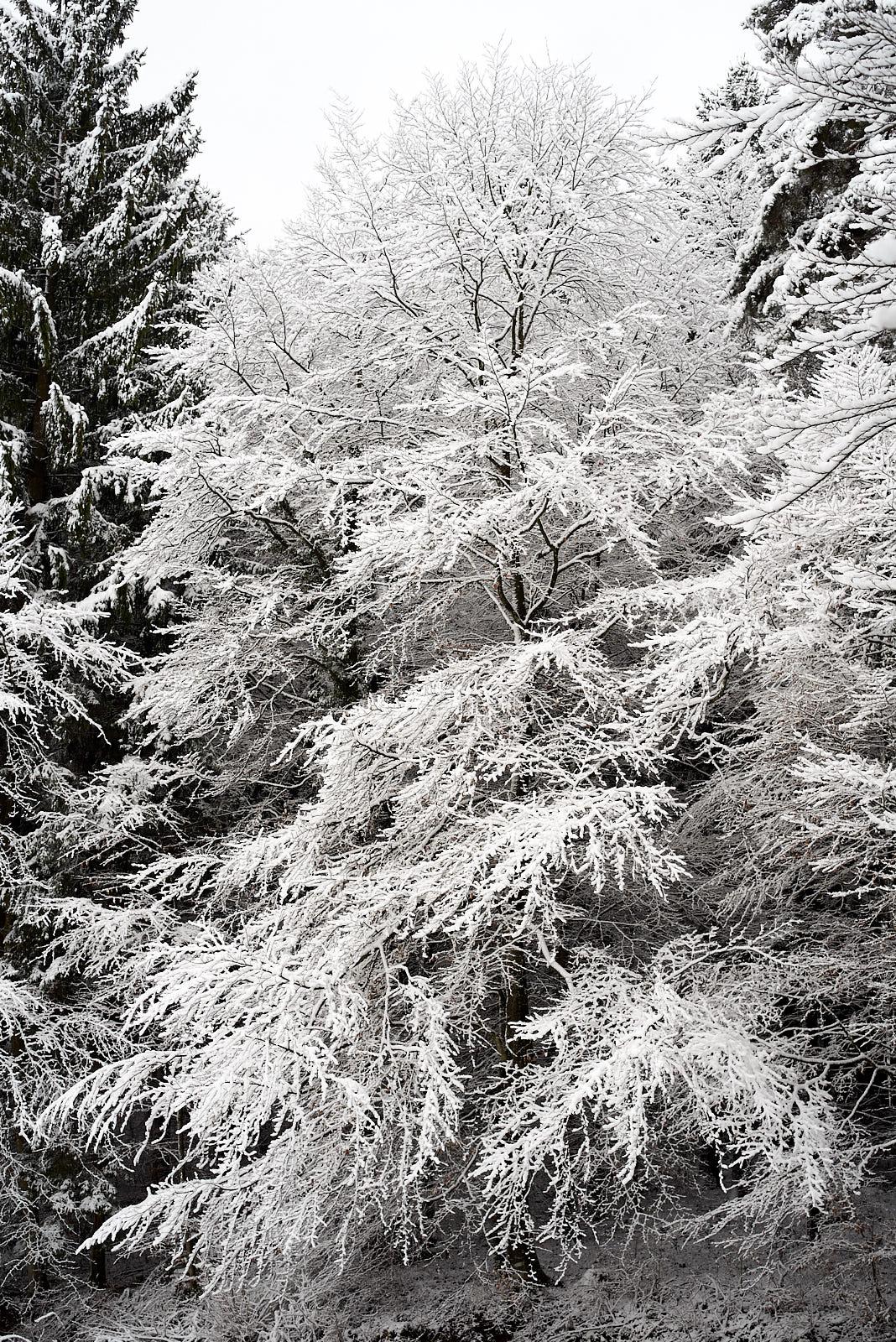 Waldgebiet Andelbach am 18. Februar 2018