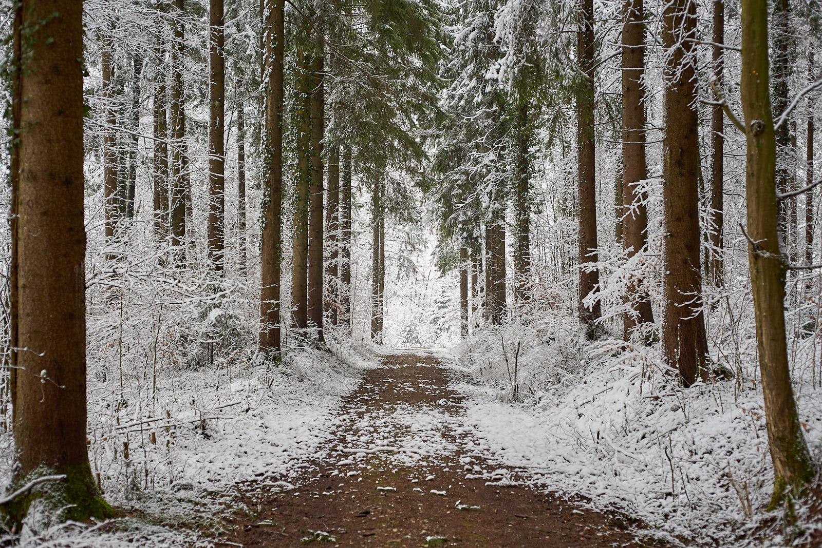 Der Kirchweg im Waldgebiet Andelbach am 18. Februar 2018