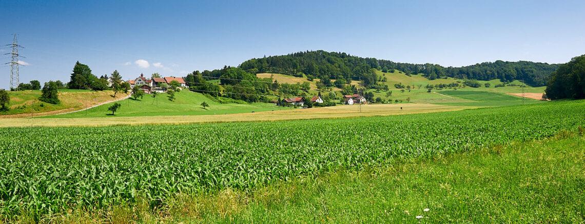 Der Talboden im Dättnau besteht aus einer rund 60 Meter dicken Lehmschicht.