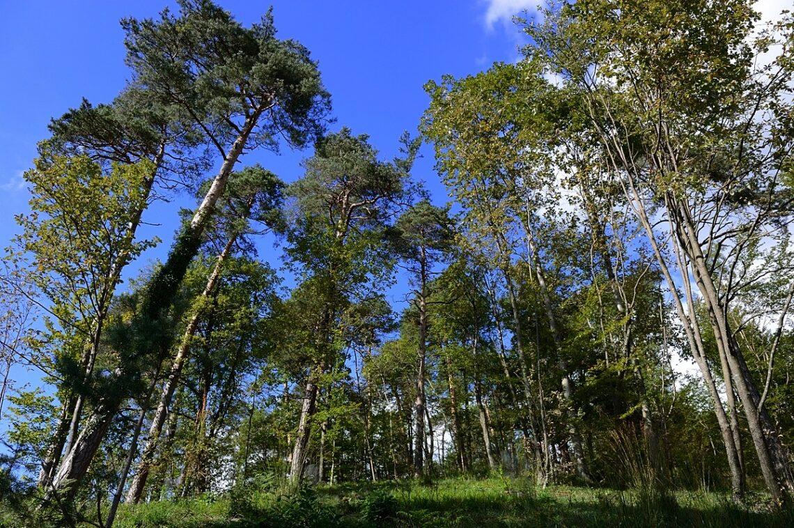 Frisch gelichteter Wald: Grosse Vielfalt an Tier- und Pflanzenarten an der Neuwingertenstrasse (Fotos: Michael Wiesner)
