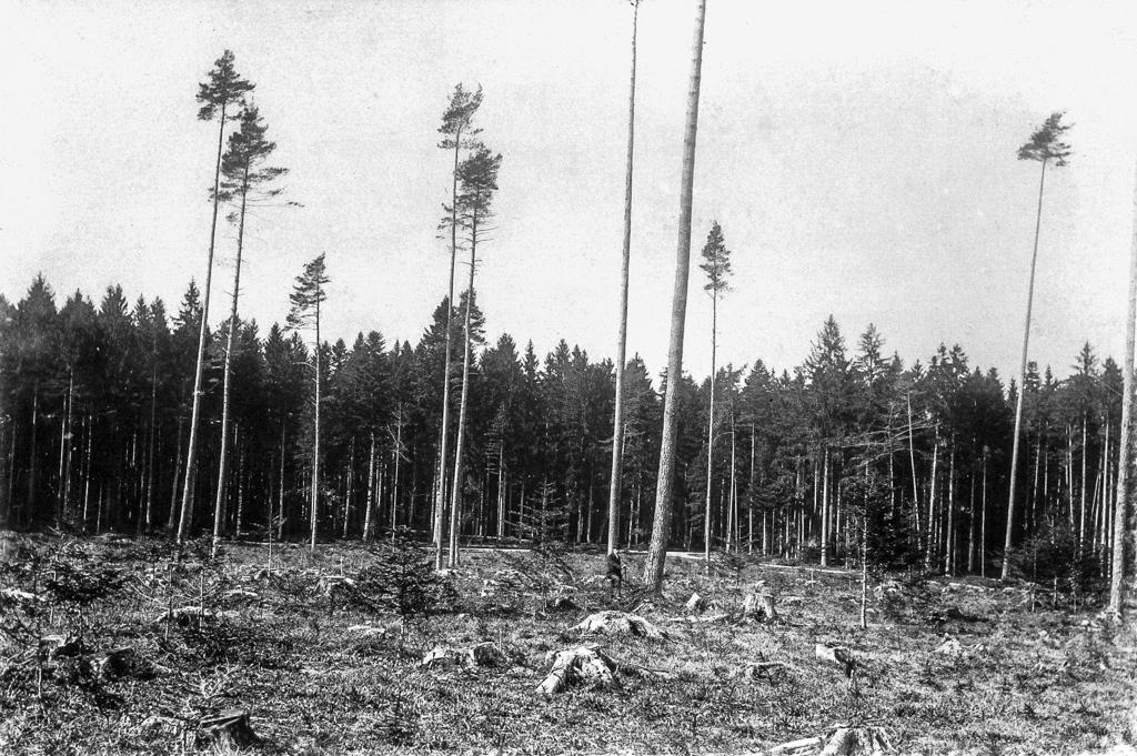 Kahlschlag 1894 und 1895 in der Waldebene (© Stadtbibliothek Winterthur)