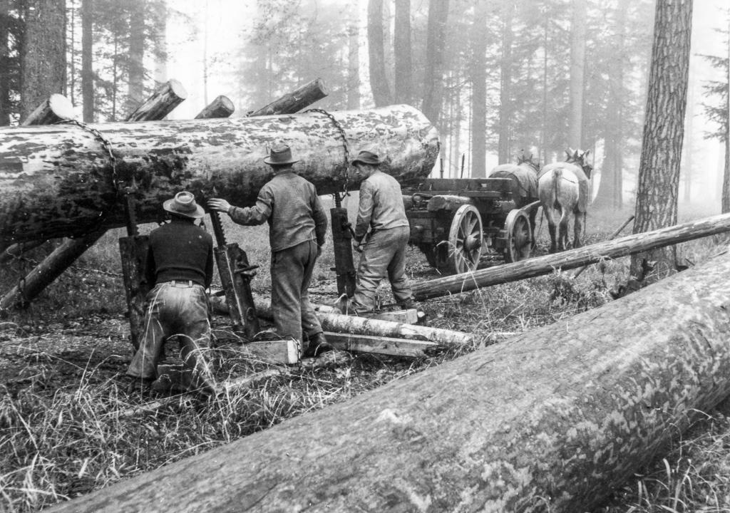 Waldarbeit 1949/1950: Vor der Mechanisierung war die Holzernte beschwerlich und gefährlich (© Stadtbibliothek Winterthur)